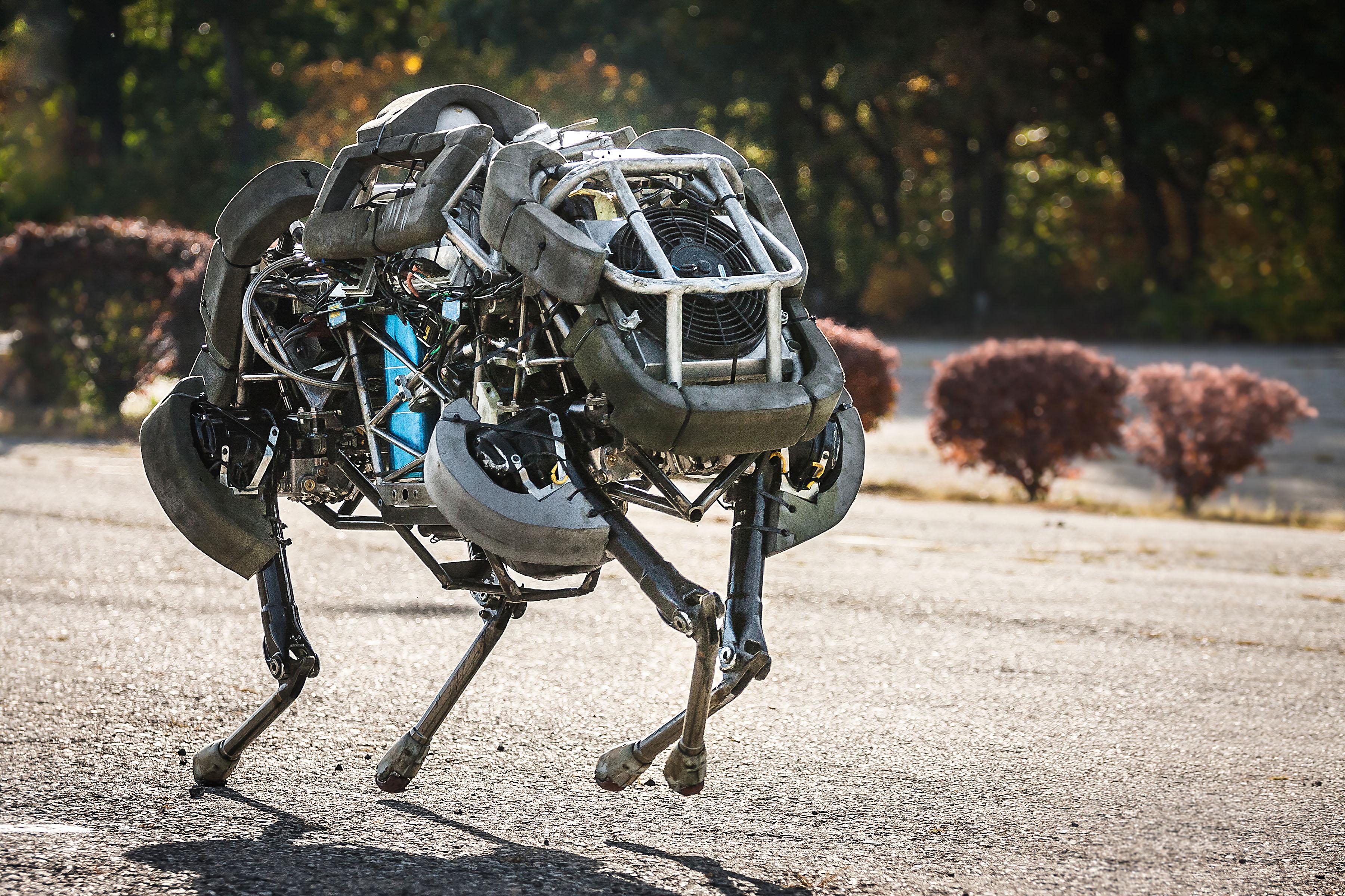 wildcat-robot.jpg